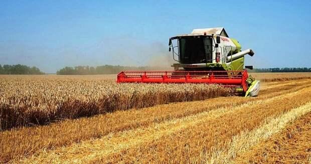 Урожай-2020 на Кубани: какие уроки нужно извлечь?