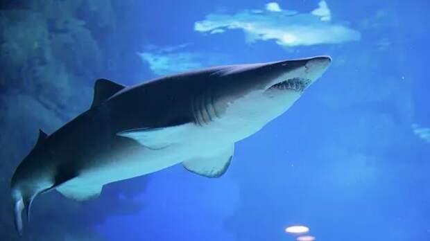 Ученые нашли пластик в кишечнике глубоководных акул
