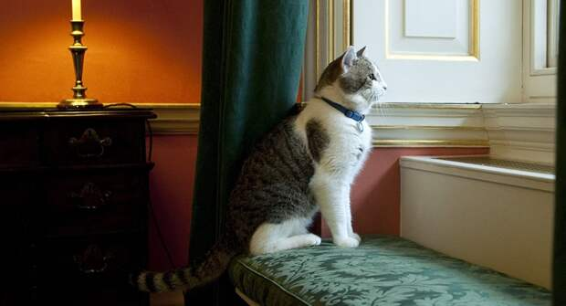 "Картинки по запросу ""кот ларри"""