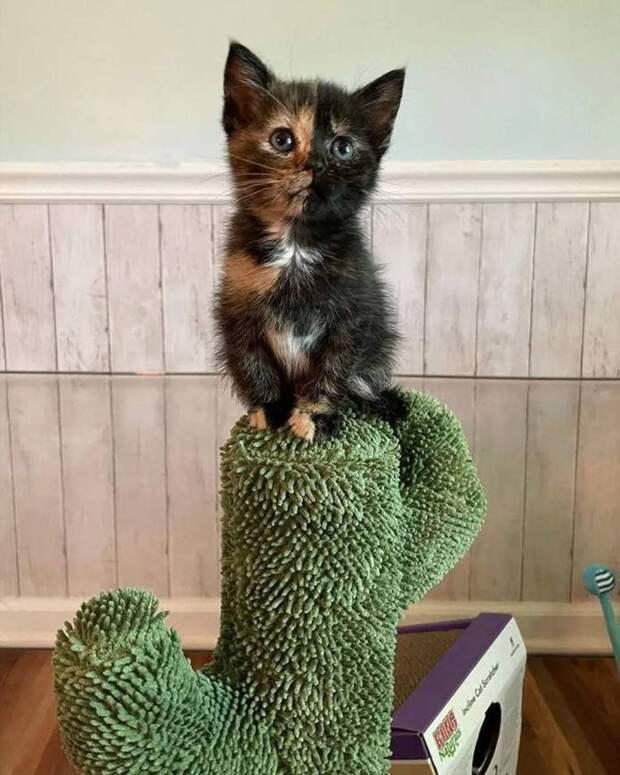Милые котята заботятся друг о друге и попутно заводят новых друзей