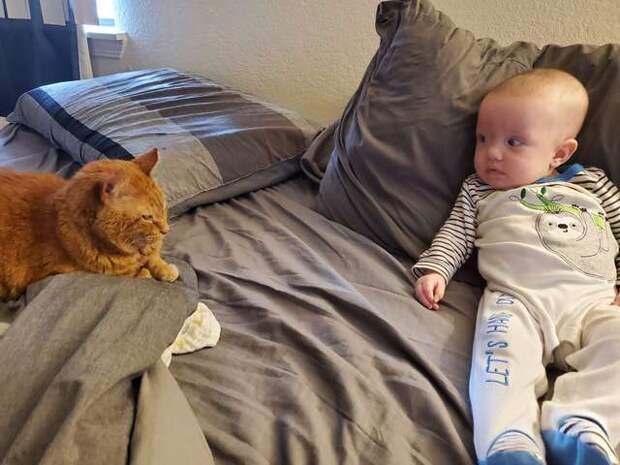 рыжий кот и ребёнок