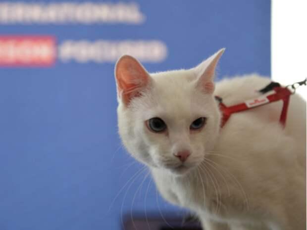 Эрмитажный кот Ахилл «предсказал» победу итальянцев в матче с турками на Евро-2020