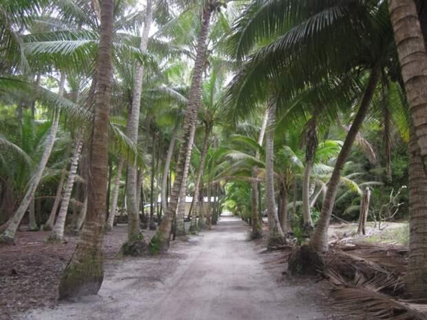 Самый удаленный остров на планете, где живут потомки одного человека (фото максимально труднодоступного места)