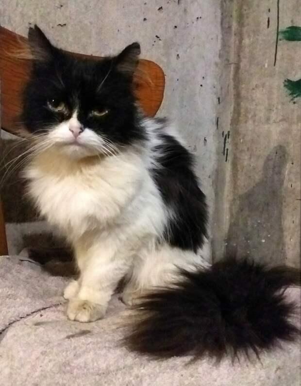 Помогите!!! В подвале пропадает бывшедомашний кот... Приютите красавца хотя бы на время, пожалуйста!