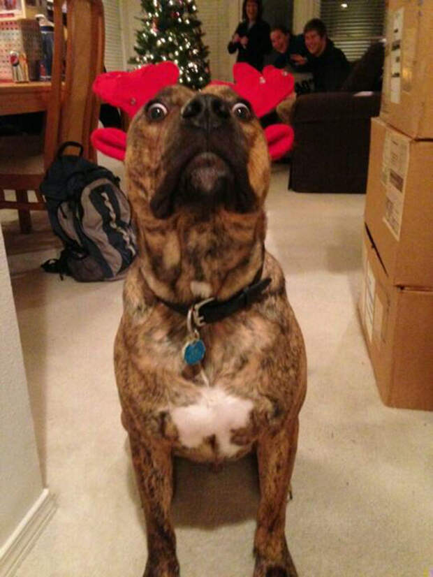 Животные, которые терпеть не могут Рождество и Новый год