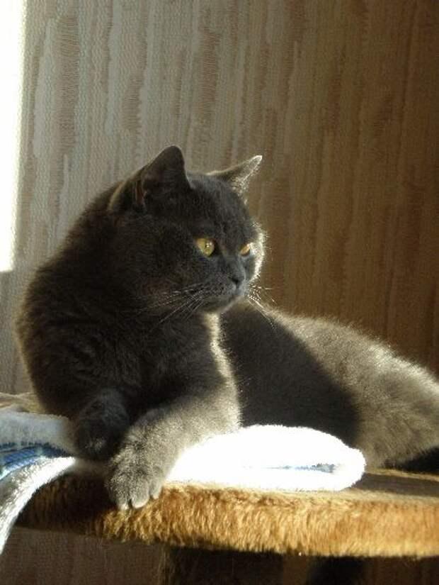 Кошка Жасмин. Фото А. Князева