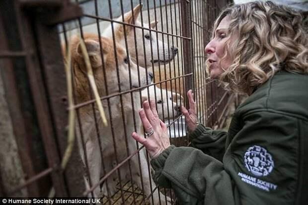 Некоторые зоозащитники не могли сдержать эмоций при виде собак животные, защитники животных, новости, собаки, спасение, фото, щенки, южная корея