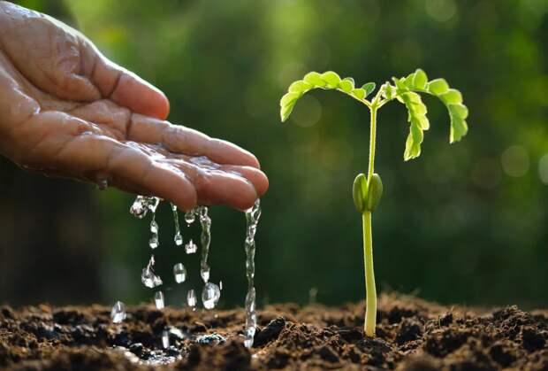 Самые распространённые садовые проблемы и способы их решения