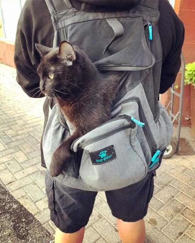 Жизнелюбивый кот Торин живет и радуется жизни вопреки своей особенности