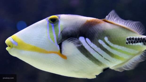 Ученые США обнаружили новые виды сухопутных рыб