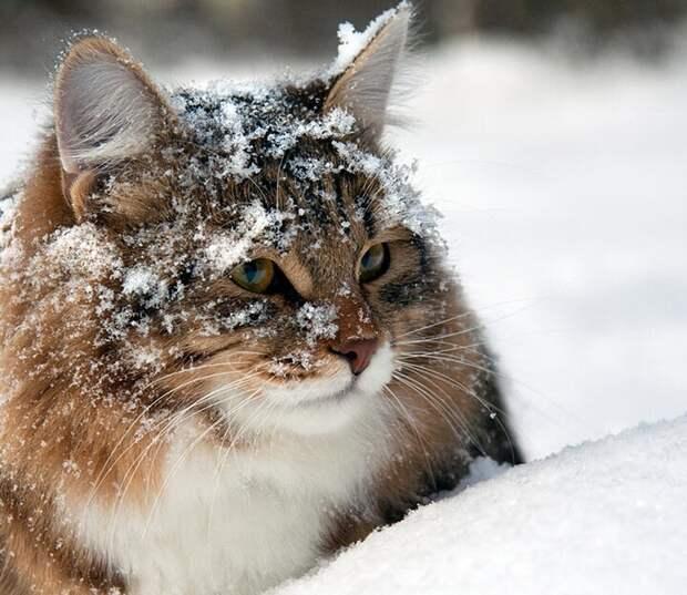 Знают ли кошки свои клички: научное исследование