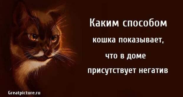 Каким способом кошка показывает, что в доме присутствует негатив