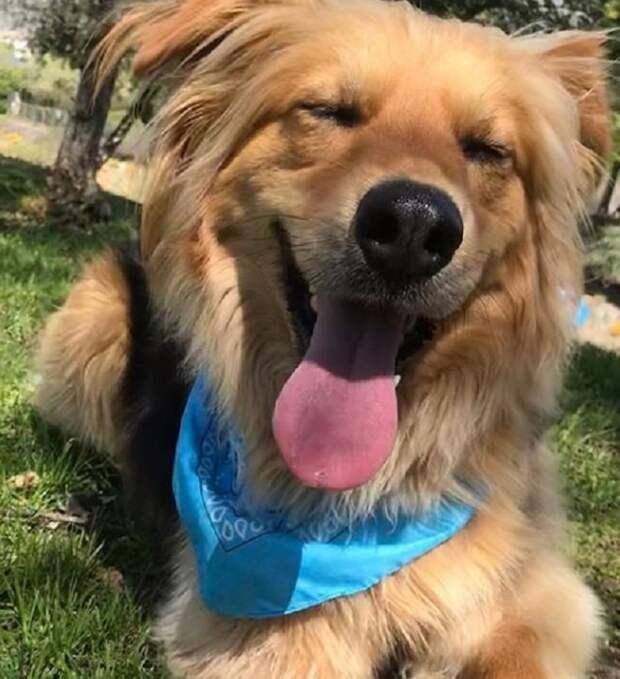 Собака со щенками бродила по улицам Сантьяго, пока кто-то наконец не пожалел её