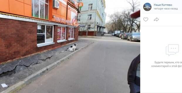 Фото дня: в Коптеве приземлился супер-пес