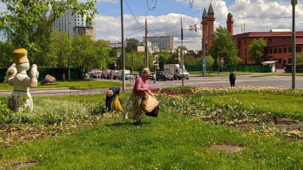 Жительницы оборвали тюльпаны с клумбы на пересечении Каргопольской и Хачатуряна
