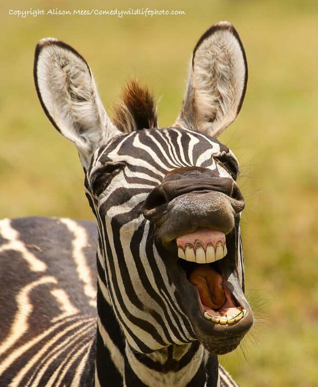 35. животные, конкурс, смех