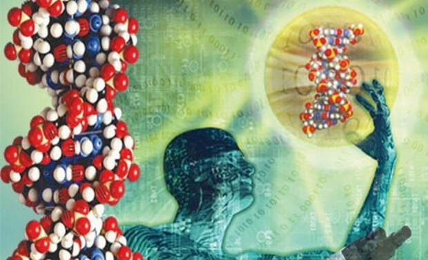 Почему у родных братьев ДНК совпадают лишь на 50%