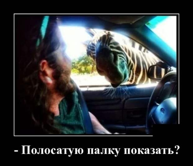 Демотиваторы про зебру