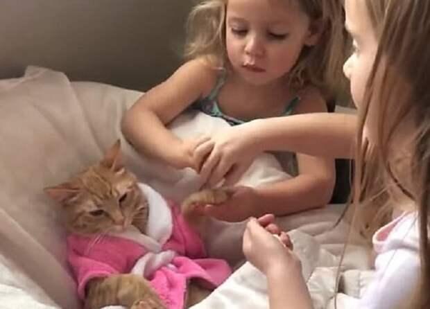 Девочки и кошка