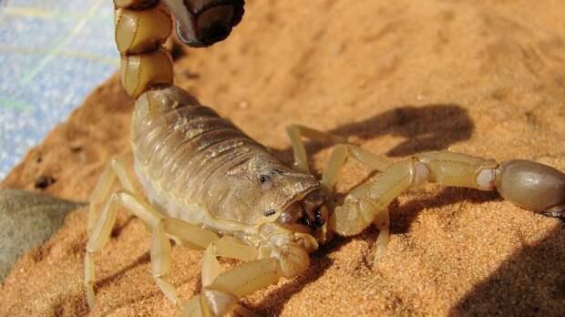 Жители Атырау пожаловались на появление скорпионов во дворах домов