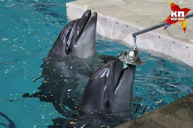 Пьяный мужчина очень хотел поплавать с дельфинами. Фото: Наиля ГАЛИМОВА