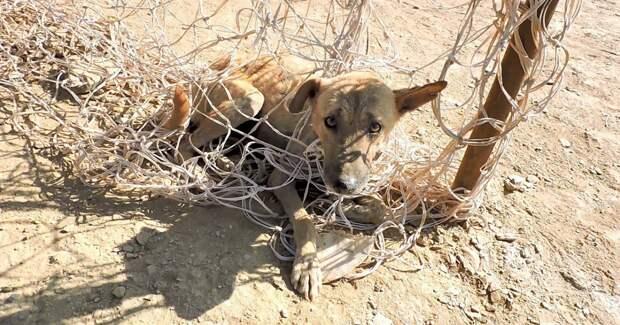 Пёс запутался в сетке… Индийская жара не щадит никого, но этот малыш — везунчик!)