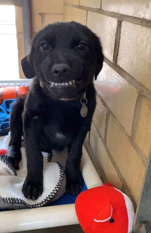 щенок улыбается