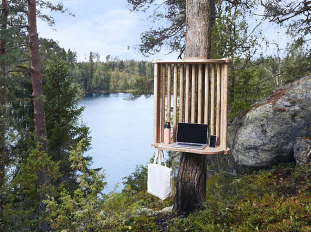 Финнам предложили кабинеты на деревьях