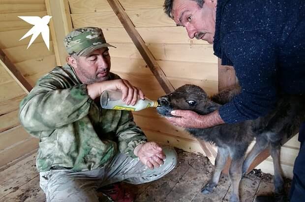 Первое время зубренка пробовали кормить с бутылочки Фото: Евгения СОКОРЕВА