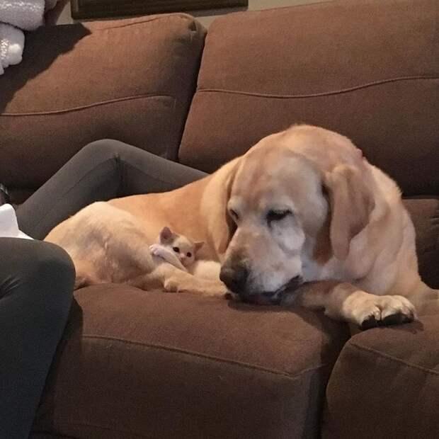 Питомцы на диване