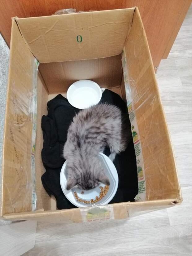 Прекрасно зная о моей аллергии, муж решил  рискнуть и забрать котенка. Есть много историй в интернете о том, как организм может привыкнуть к аллергену и совсем перестать реагировать. На это мы и рассчитывали. А пока, главным было спасти маленького и помочь ему восстановиться. Подарить шанс на жизнь!