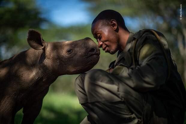 25 лучших снимков дикой природы в 2019 году