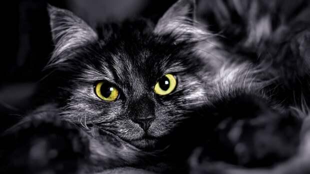 дневник кота-параноика