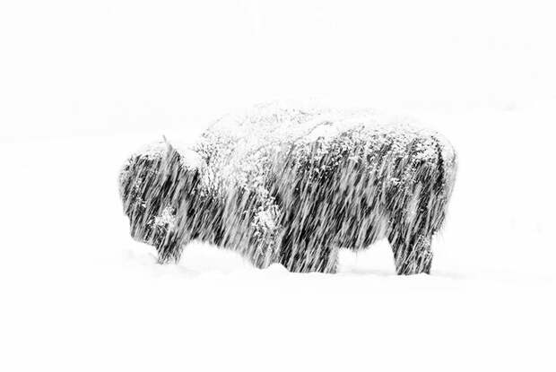 Лучшие фотографии дикой природы 2019 года Фотография, Конкурс, Интересное, Познавательно, Перевод, Длиннопост