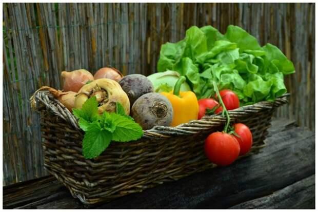 Где это росло до того, как пришло к нам интересное, овощи, происхождение, факты
