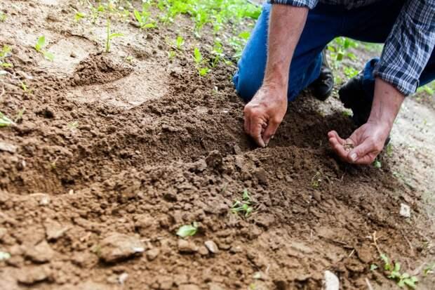 6 самых простых цветов, которые нужно посадить в апреле на рассаду