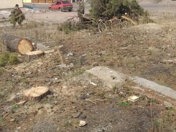 Деревья срубили в Сосновом бору для постройки торгового комплекса
