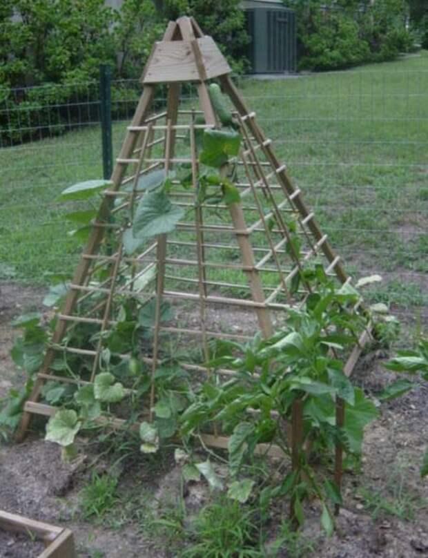 Огуречная пирамида. Интересная идея на заметку