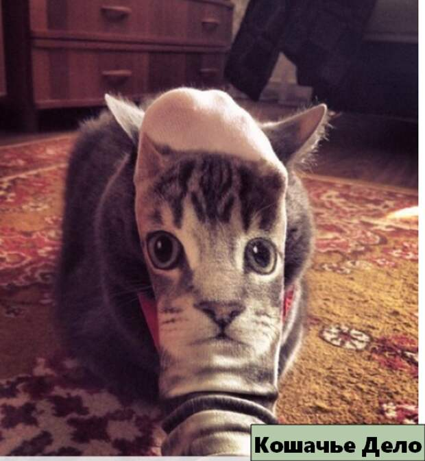 12 уморительных котиков, которых сфотографировали в нужный момент