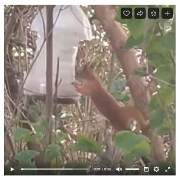 Видео: утренняя трапеза белки в Щукинском лесопарке