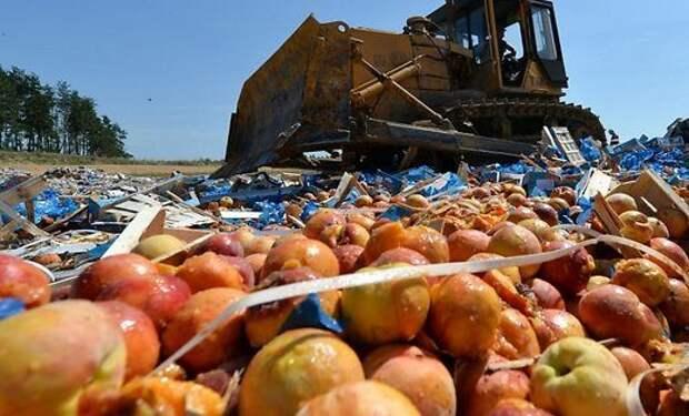 Россельхознадзор уничтожил 9000 тонн санкционной еды