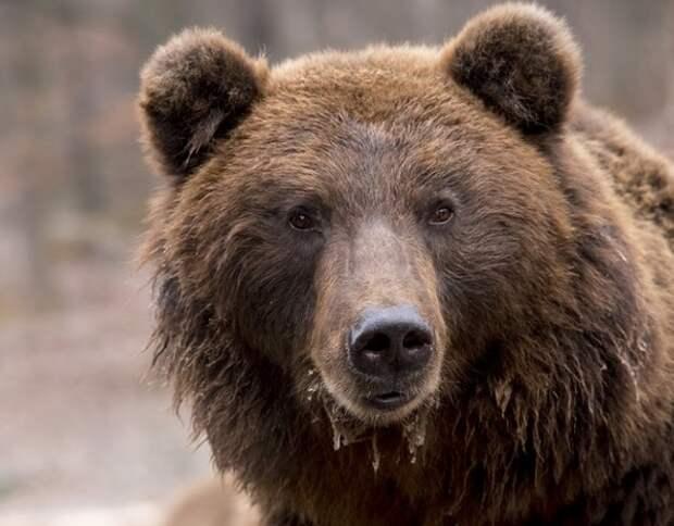 Медведь напал на туристов в красноярском природном парке, спастись удалось не всем