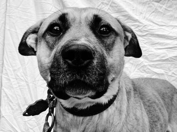 5 грустных фактов о том, как бойцовые собаки попадают в приют из-за агрессии людей
