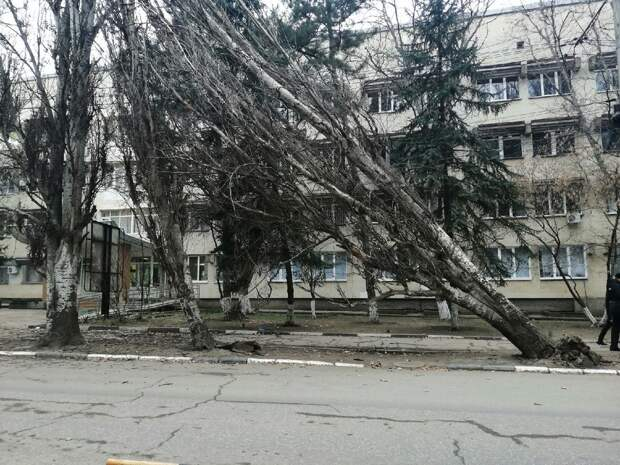 В Симферополе сильный ветер вырвал деревья с корнями