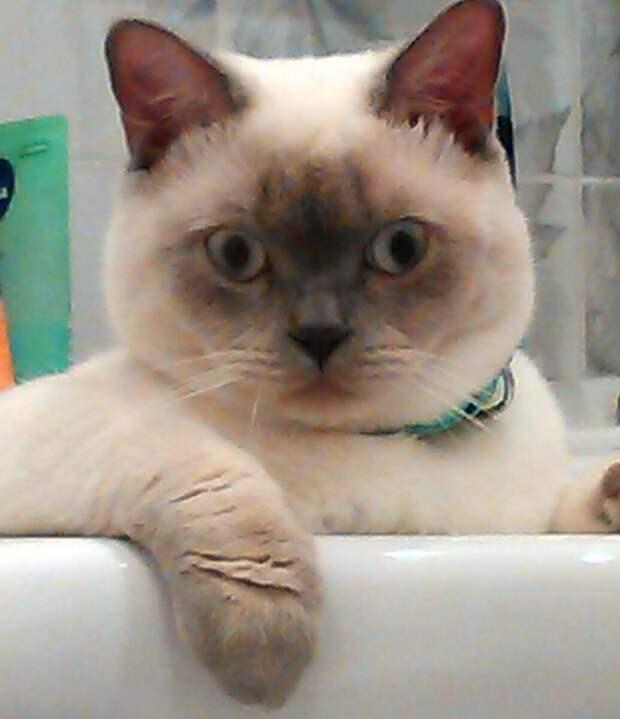 Идите и живите в доме своего кота!- Сказала свекровь и выгнала их из дома