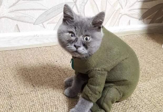 Вечно удивлённый кот Федя из Ростова покорил соцсети