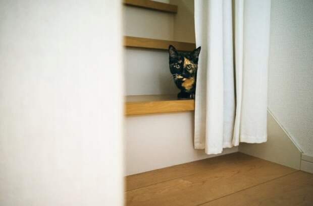 Есть пять типов личности кошек – какая из них подходит вашей?
