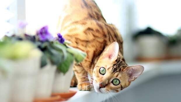 Зоологи определили, как кошки относятся к своим хозяевам