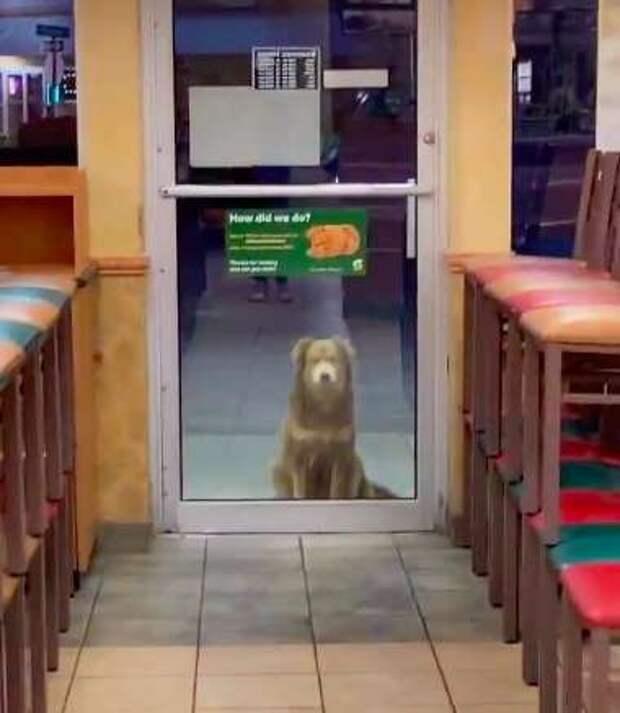 Каждую ночь дворняга появляется на пороге ресторана и терпеливо ждёт… Её глаза полны надежды