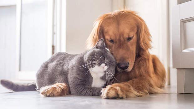 Какие коты и собаки могут подружиться в одном доме